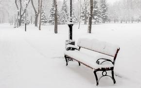 Природа: деревья, скамья, лавка, снег, лавочка, фонари, зима, скамейка, аллея, природа, парк