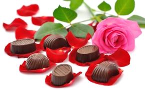 Обои Разное: букет, конфеты, красивые, красота, шоколад, цветы