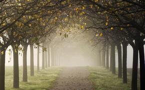 Пейзажи: дорога, туман, аллея, осень, деревья