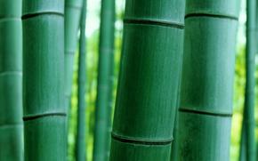 Текстуры: природа, ствол, макро, бамбук
