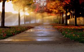 Город: алея, листва, боке, свет, осень, деревья, город, аллея