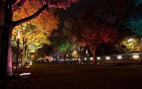 Город: ``Фестиваль света``, ночь, освещение, фонари, лампы, подсветка, деревья, Берлин, Германия, улица, аллея, город