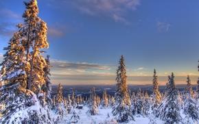Пейзажи: снег, зима, ели, Норвегия