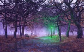 Разное: фонарь, деревья, Осень, аллея, лужи