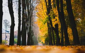 Природа: листья, осень, дома, аллея, дорога, опавшие, деревья, желтые