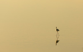 Минимализм: природа, птица, минимализм
