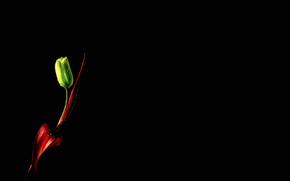 Минимализм: зелёный, тюльпан, капли