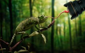 Ситуации: объектив, муха, хамелеон, язык, промах