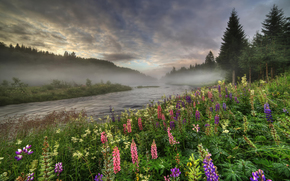 Пейзажи: лето, цветы, туман, Норвегия, деревья, река, люпин, лес