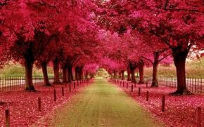 Природа: аллея, здание, столбики, ограда, листва, Деревья