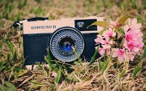 Настроения: настроения, зелень, широкоформатные, трава, фон, обои, цветы, камера, широкоэкранные, фотоаппарат, цветочки. розовый, полноэкранные
