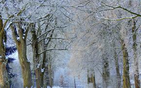 Природа: аллея, снег, иней, зима, деревья