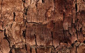 Текстуры: текстура, дерево, кора