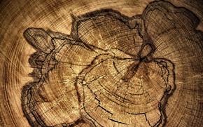 Текстуры: дерево, текстура, узор