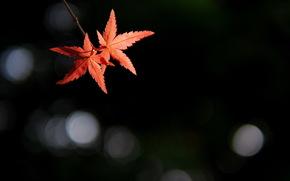 Минимализм: фон, ветка, листья, блики