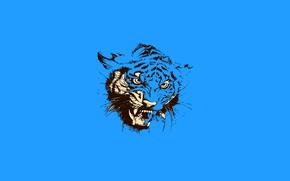 Минимализм: пасть, кошка, тигр, животное, оскал