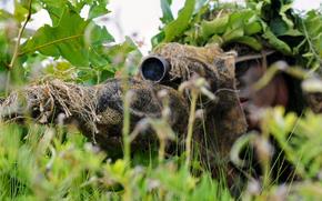 Мужчины: трава, снайпер, винтовка, маскировка, прицел, засада