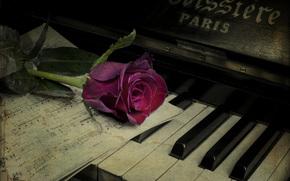 Музыка: пианино, винтаж, цветок, роза, ноты