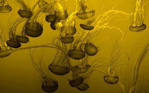 Текстуры: фон, много, медузы