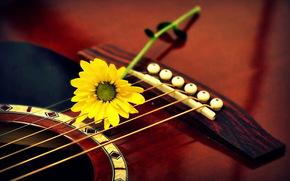 Музыка: макро, гитара, цветок