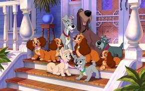 Фильмы: персонажи, герои, Леди, щенки, Бродяга, мультик, мультфильм, собаки, Трасти, Джок, крыльцо, Леди и Бродяга, дом