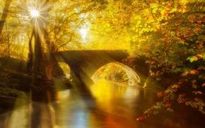 Пейзажи: осень, прогулка, парк, деревья, мост, аллея, вид, вода, река, лес, листья, природа