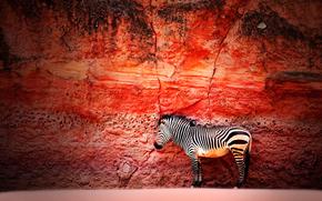 Минимализм: зебра, стена, камень