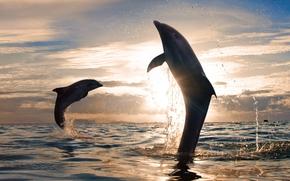 Обои Животные: закат, красивые, солнце, море, плеск воды, прыжки, игривые дельфины, природа, облака, небо