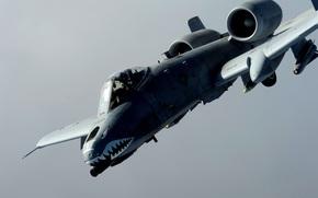 Авиация: Рипаблик, штурмовик, одноместный, Фэйрчайлд, двухдвигательный, бронированный, американский