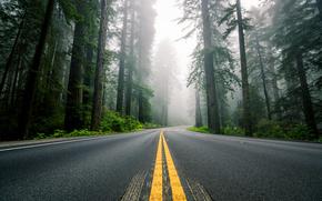 Природа: природа, разметка, туман, лес, шоссе, секвойи, деревья, дорога, Северная Америка, США