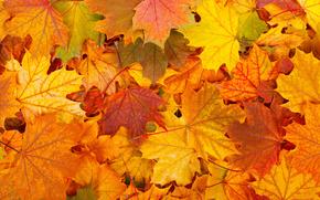 Текстуры: листопад, осень, листья