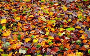 Текстуры: природа, ковер, осень, листья