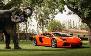 Машины: отражение, слон, Lamborghini, деревья, здание, авентадор, вид спереди, оранжевый, ограждение, ламборгини