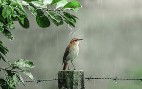 Ситуации: душ, дождь, птичка, капли