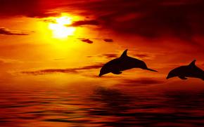 Обои Животные: вскакивая, облака, солнце, океан, дельфин, небо, Красивые, закат