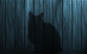Текстуры: тень, силуэт, кошка, текстуры, Стена, доски, деревянные