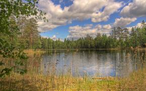 Оружие: озеро, лес, деревья, пейзаж