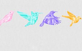 Минимализм: колибри, цвет, графика, птица, кадр, полет