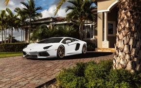 Машины: авентадор, белый, особняк, Lamborghini, ламборгини, пальмы, перед, ламборджини