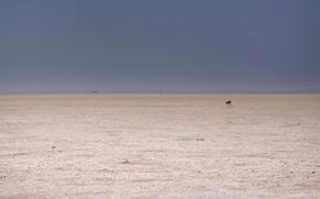 Минимализм: косуля, пустыня, минимализм