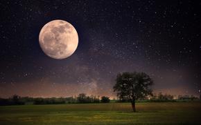 Обои Пейзажи: полная луна, небо, природа, пейзаж, Одинокое дерево, красивые сцены, луна, ночь, звезды