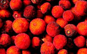 Текстуры: плоды, земляничное дерево, многосеменная костянка