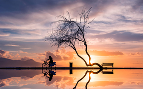 Природа: закат, женщина, отражение, велосипед, дерево, силуэты