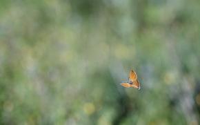 Минимализм: фон, размытость, блики, бабочка, полет