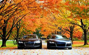 ������: Audi R8, �����, ����