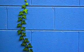 Текстуры: стена, растение, текстура