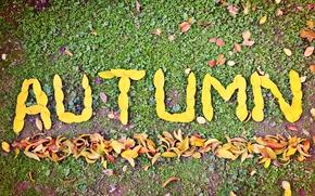 ������: ����, �����, autumn