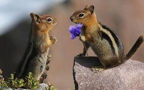 Животные: ground squirrels, бурундуки, любовь