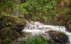 �������: ���, �������, ����, �������, �������, Dominical, Costa Rica