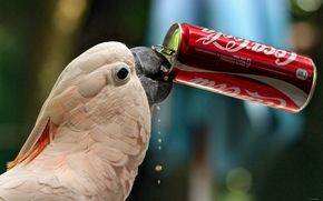 ��������: ������, �������, Coca-Cola, �����, �����